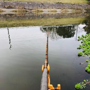 今日は釣れるはずと思って行った。