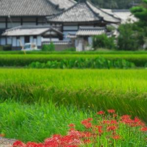 飛鳥寺界隈