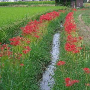 藤原宮跡の用水路