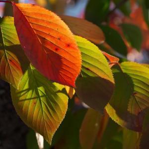 わが町内の秋