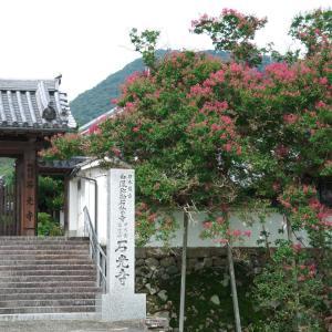 石光寺 シャクナゲ