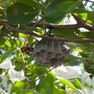 蜂の巣その後