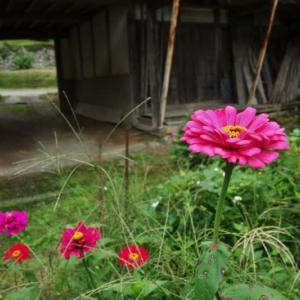 ある農家の庭先