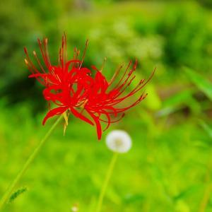この世の花