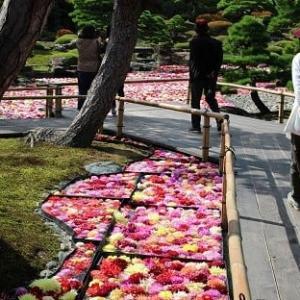 池泉に浮かぶダリア~由志園へ