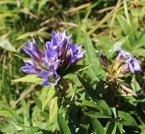 秋の野の花を楽しむ吾妻山