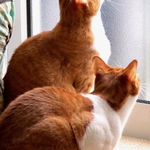 ◇窓の外から撮ってみた