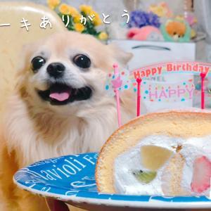 ラピス8歳の誕生日ケーキ