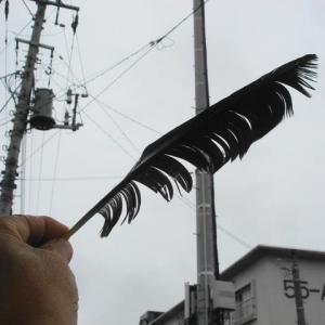 カラスの羽ペン
