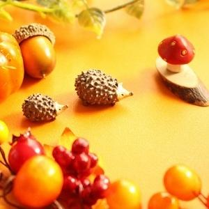 秋になって色々落ち着く