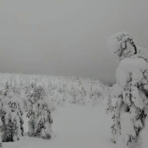 ようやく、スキーを楽しめる気分になりました!