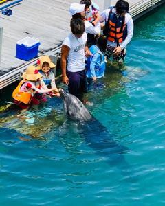 沖縄旅行Day3「ドルフィンプログラム」