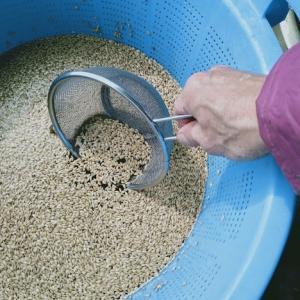 塩水選で始まる米つくり!