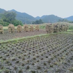 稲刈り2日終わって、中休み!