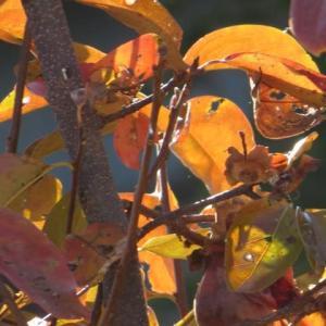 秋の風物詩!