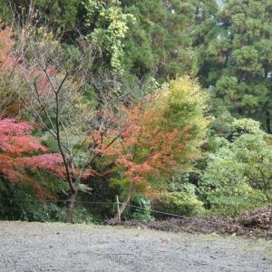 秋  ⑥  久留米市高良山より