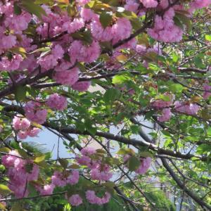 散歩道の朝花―㊴