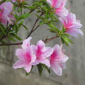 散歩道の朝花―㊶