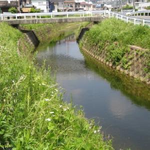 散歩道の色々 ㉙ 水田地帯