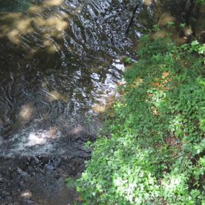 川面の景色