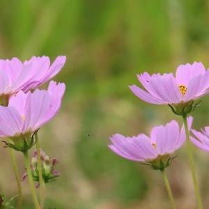 散歩道の朝花―㊽