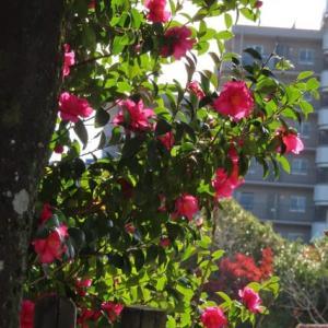 散歩道の朝花