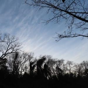 冬の散歩道 ①    冬の空 小鳥