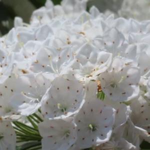 中山寺の花