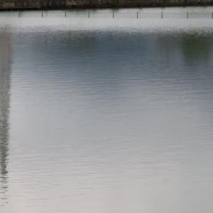 上ノ池の水面と空