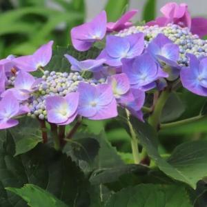 花色々 空色々