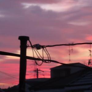 華と夕空、そして鳥
