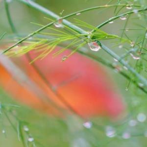 雨上がりの赤塚植物園(2019.10.19 撮影)