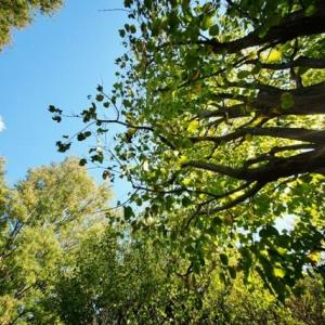 超広角10ミリレンズで撮った木漏れ日射す赤塚植物園(2019.11.4 撮影)