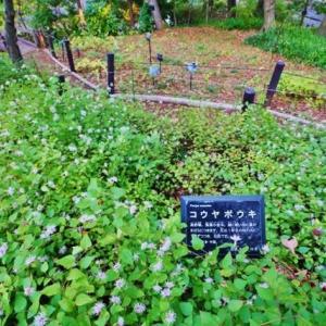 秋深まる(赤塚植物園 2019.11.16 撮影)