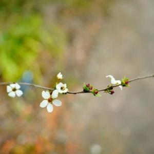 春を彩る木に咲く花々(赤塚植物園 2020.2.15 撮影)