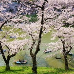 都内の名所の桜(過去との撮影)