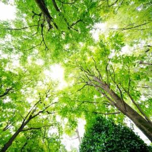 緑深き植物園(赤塚植物園 2020.7.11 撮影)
