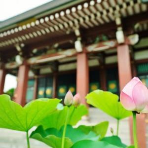 乗蓮寺の蓮の花 その1(板橋区赤塚 2020.7.26 撮影)