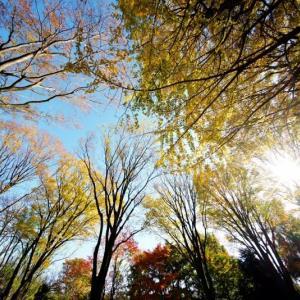 秋深まる赤塚植物園 その4(2020.11.22 超広角レンズで撮影)