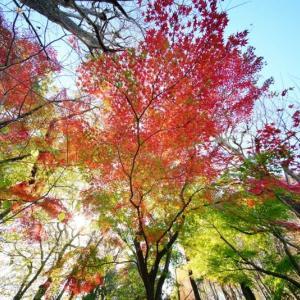 秋深まる赤塚植物園 その5(2020.11.22 超広角レンズで撮影)