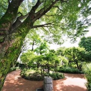 トラノオ、ノカンゾウ、ヤブカンゾウ、ウマノスズクサ(赤塚植物園 2021.6.20撮影)