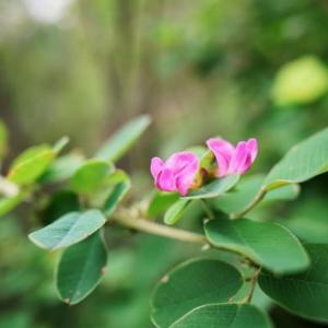 秋を彩る小さな花々(赤塚植物園 2021.9.5撮影)