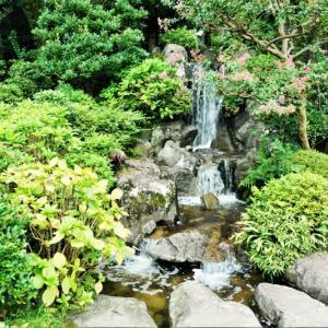 徳水亭の滝(板橋区立水車公園 2021.9.8撮影)