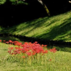 小石川後楽園のヒガンバナ(2021.9.20撮影)