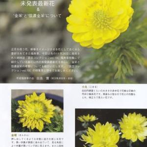 福寿草~未発表最新花ほか 2020年1月18日(土)