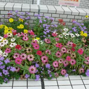 一関郵便局の花壇 2021年9月24日(金)
