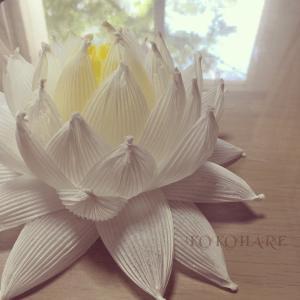 真っ白なハスの花を