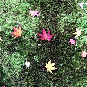 そうや、京都いったろ① 天授庵の紅葉