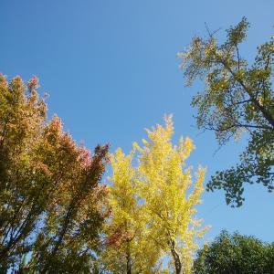 私が秋冬を感じる画像3枚