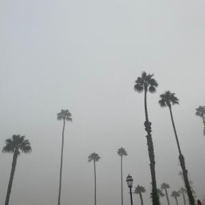 霧のカリフォルニア